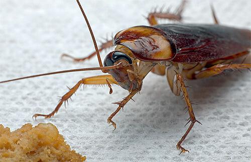 народные средства борьбы с паразитами в организме