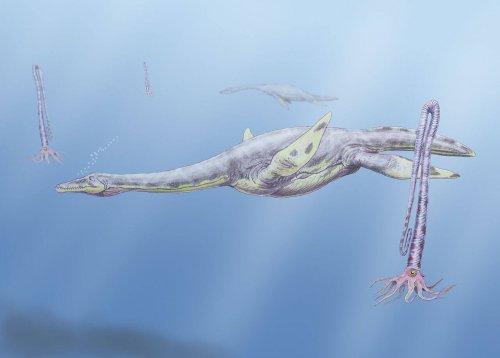 Aristonectes parvidens в представлении художника. Иллюстрация Dmitry Bogdanov, Wikimedia Commons.